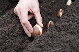 fall-planting