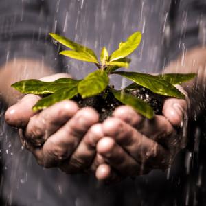 raingarden