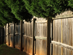Wooden fence with overhanging trees